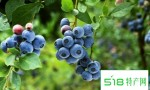蓝莓苹果葡萄的水果可防2型糖尿病