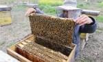 吃蜂巢能治疗鼻窦炎吗