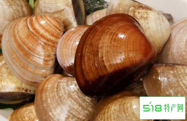 蛤蜊的品种分布