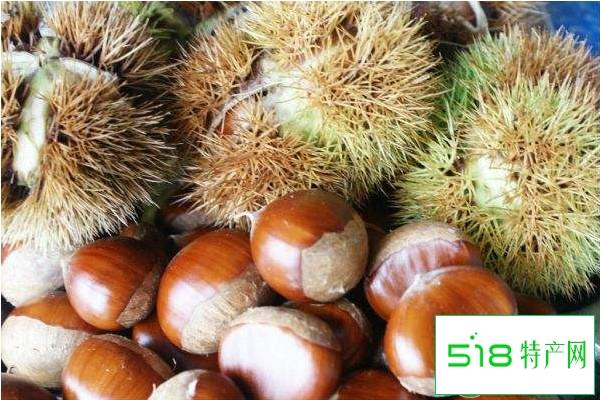 板栗品种哪种最好吃?