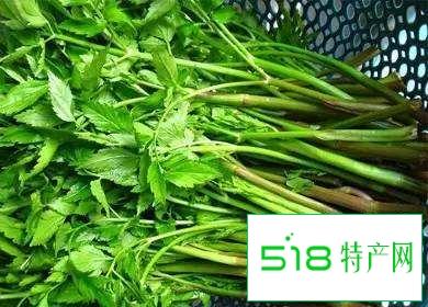 张家界野菜