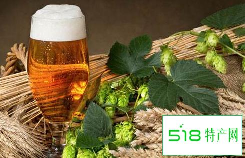 啤酒中为什么要加入啤酒花?啤酒花有什么功效?