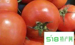 北票西红柿