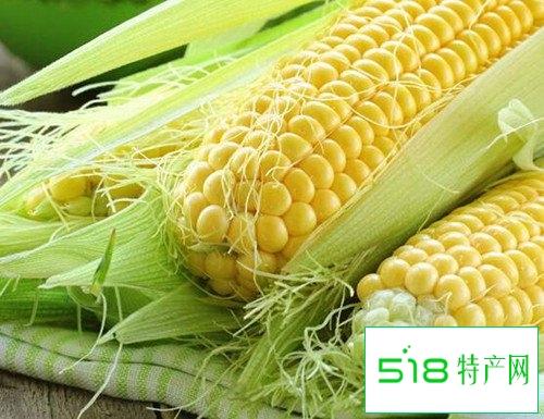 吃玉米可以防治冠心病