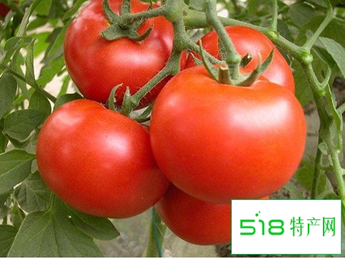 西红柿在生活中的五个妙用