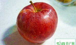 苹果变甜了其热量并不增加