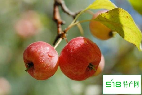 海棠果的营养价值及营养成分 什么时候吃价值高