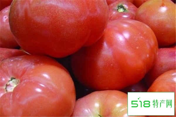 室内养西红柿的危害