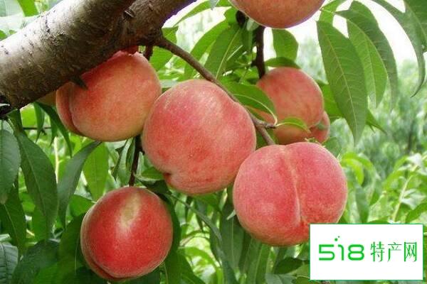 水蜜桃的营养价值及营养成分 什么时候吃价值高