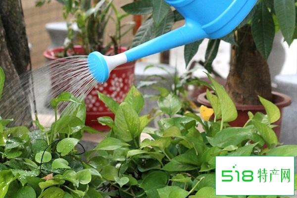 绿植多长时间浇一次水