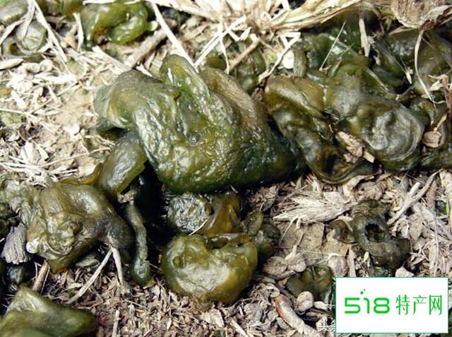 山野美食——地皮菜
