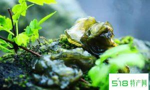 """""""地耳""""——集美味、营养、药疗于一体的珍馐山蔬佳品"""