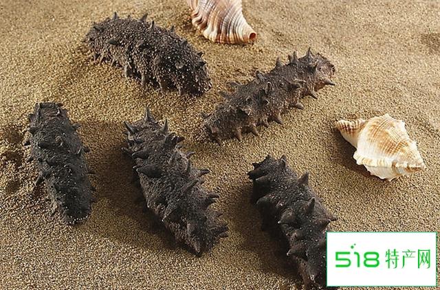 什么是海参,海参有哪些种类