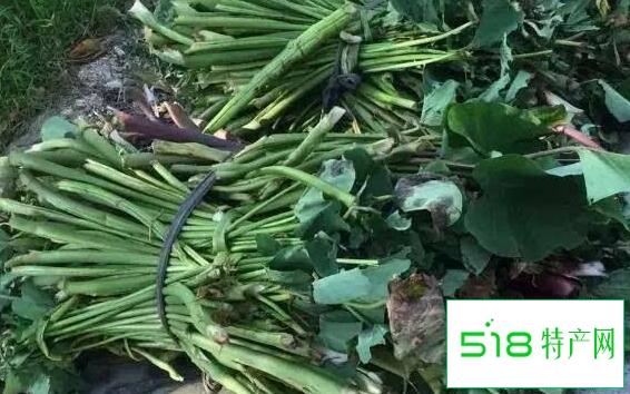 新鲜芋苗的功效与作用