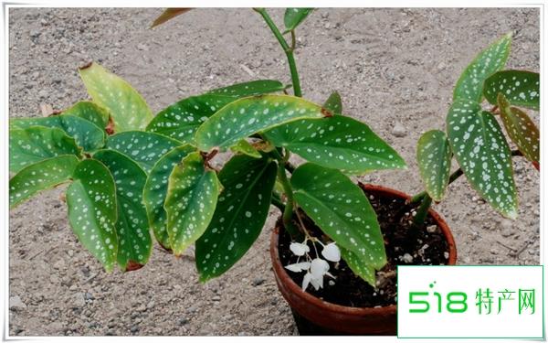 室内木本植物哪些好养