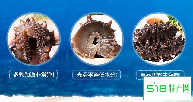 一样是海参,品质却有天壤之别!老渔民告诉你,如何挑选好海参