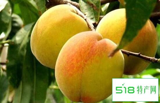 红皮黄桃和黄皮黄桃区别 吃黄桃的好处