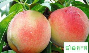 水蜜桃是热性还是凉性 吃水蜜桃的好处与坏处