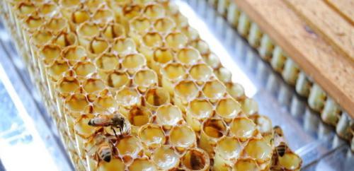 女人吃蜂王浆的好处与功效