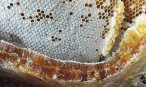 蜂巢蜜、蜂巢蜜的作用与功效